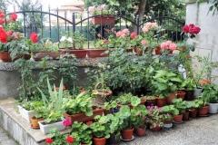 Dom-Dimovi-Front-Yard