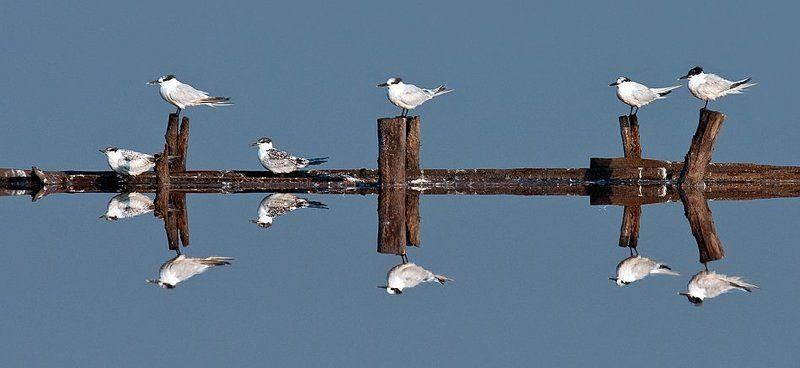 птици южно черноморие